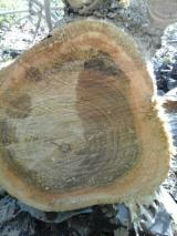 Bosques En Venta - Vendo Teca de 23 años
