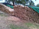Cylindrical Trimmed Round Wood - Teak Stakes/Poles FSC