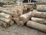 Eucalyptus Hardwood Logs - Eucalyptus Saw Logs, diameter 10-30 cm