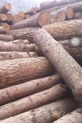 Grumes Résineux À Vendre - Trouvez Sur Fordaq Les Fournisseurs - Vend Grumes De Sciage Pin  - Bois Rouge