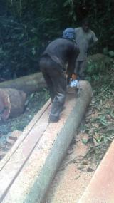 Schnittholz Und Leimholz Afrika - Schwellen, Bubinga , Congotali, Doussie , Thermisch Behandelt - Thermoholz
