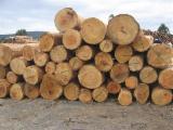 Eucalyptus  Hardwood Logs - Eucalyptus Saw Logs, diameter 20+ cm