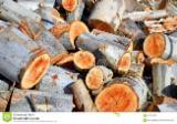 Wälder und Rundholz - Schnittholzstämme, Eukalyptus