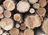 Acacia Hardwood Logs - We Supply Acacia Saw Logs, diameter 20 - 50 cm