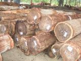 Wälder und Rundholz - Schnittholzstämme, Robinie
