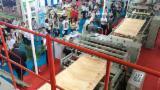Belt Conveyor - New EUC CLJ/13 Veneer Belt Conveyor, 2017