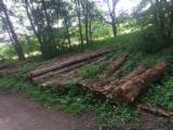 Drewniane Kłody Na Sprzedaż - Fordaq - Kłody Tartaczne, Cis , PEFC/FFC