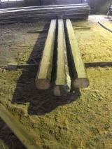 Cherestea Tivita Rasinoase - Lemn Pentru Constructii - Cumpar Structuri, Grinzi Pentru Schelete, Capriori Pin Rosu, Molid 104, 124 mm