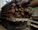 Wälder und Rundholz - Schnittholzstämme, Teak