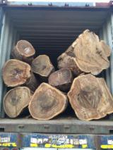 Forest And Logs For Sale - 20 cm Palo Santo Poles from Colombia