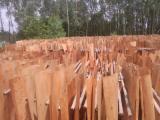 Schälfurnier Eukalyptus Zu Verkaufen - Robinie , Eukalyptus, Rundschälfurnier