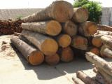 Softwood  Logs For Sale - Spruce Saw Logs, diameter 24-75 cm