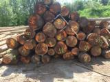 Black Walnut Logs 35-50 cm