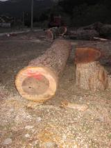 Greece Hardwood Logs - Extra Veneer Walnut Logs, diameter 50-90 cm, Full with black colour