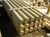 Hardwood Logs Suppliers and Buyers - Acacia / Beech Poles 12-26 cm