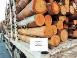 Wälder Und Rundholz Südamerika - Furnierholz, Messerfurnierstämme, Eukalyptus