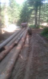 Softwood  Logs - Pine Saw Logs For Sale, diameter 22 cm