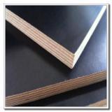 FSC Plywood for sale - 18 mm Poplar / Elm Black Filmed Plywood