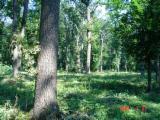 Serviços Florestais - Entre Na Fordaq E Contate Empresas Especializadas - Manutenção Florestal, Roménia