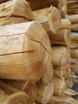 Hardwood Logs for sale. Wholesale Hardwood Logs exporters - ACACIA POLES