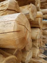 Tvrdo Drvo  Trupci Za Prodaju - Bagrem