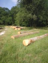 Grumes Feuillus à vendre - Grumes de chêne bord de route