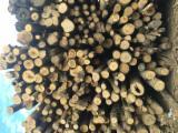 Drewno Liściaste Kłody Wymagania - Kłody Tartaczne, Jesion Amerykański , Brzoza, Grab