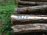 Hardwood Saw Logs For Sale - 12-25 cm Acacia Saw Logs from Germany, Pfalz