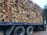 Hardwood Saw Logs For Sale - Eucalyptus Logs 30 cm