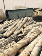 Hardwood  Logs - Birch Veneer Logs, diameter 25 cm