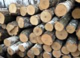 Hardwood  Logs - Aspen Saw Logs, diameter 10-35 cm