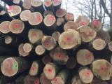 Belgium Hardwood Logs - Red Oak Logs 30; 39; 40+ cm