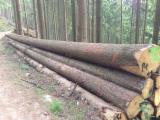 Softwood  Logs For Sale - BC Grade Spruce Saw Logs, diameter 21-45 cm