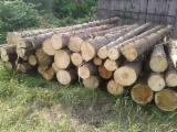 null - -- mm Fresh Sawn Spruce , Pine  - Scots Pine Romania
