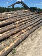 Softwood  Logs For Sale - SYP Logs from USA