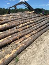 Bossen en Stammen - Zaagstammen, Southern Yellow Pine