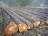 经加压处理的木材及建筑材  - 联络制造商 - 落叶松