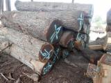 Unedged Hardwood Timber - Black Walnut Boules Netherlands