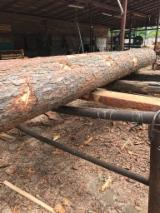 最大的木材网络 - 查看板材供应商及买家 - 毛边材-圆木剁, 红松