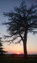 Arbres À Exploiter À Vendre - Achetez Ou Vendez Des Bois Sur Pied - Gros cèedre du Liban
