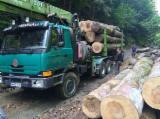 Oprema Za Šumu I Žetvu Kamion Za Prevoz Dužih Stabala - Kamion Za Prevoz Dužih Stabala Tatra Polovna 2000 Rumunija
