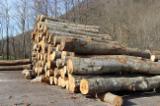 Laubrundholz  Buche - Schnittholzstämme, Buche