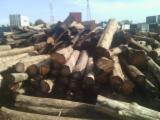 Laubrundholz  Teak - Schnittholzstämme, Mahagoni, Teak