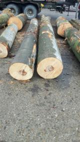 Sprzedaż Hurtowa Okleina Z Twardego Drzewa I Egzotyczna Z Całego Świata - Jesion Amerykański , Owodowo Skrawane