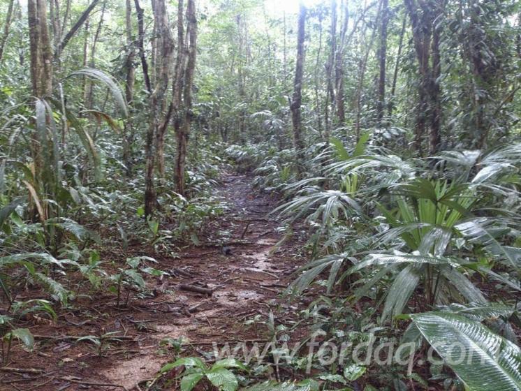 Almendro-Woodland-from-Costa-Rica-202