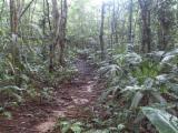 Waldgebiete Almendro - Costa Rica 202 Hektar Primär-Urwald
