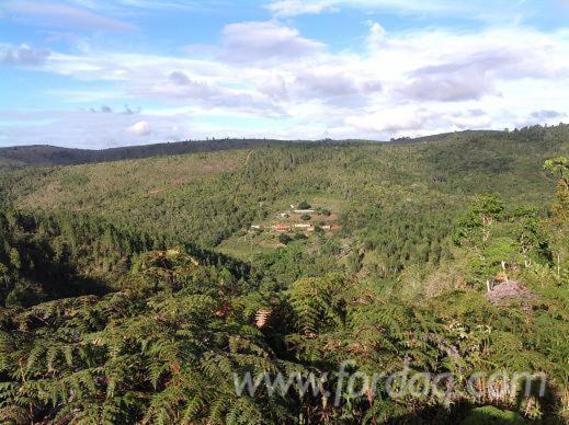 Eucalyptus-375-ha-Woodland-in