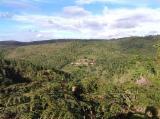 Waldgebiete Zu Verkaufen - Brasilien Bahia 375 ha Fazenda Eukalyptus