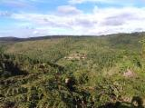 Switzerland Woodland - Eucalyptus Woodland from Brazil 375 ha