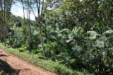 Waldgebiete Zu Verkaufen - Brasilien Fazenda 310 ha Wald, Eukalyptus und Palmito